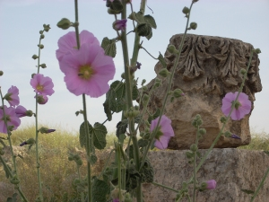 flowers growing among the ruins
